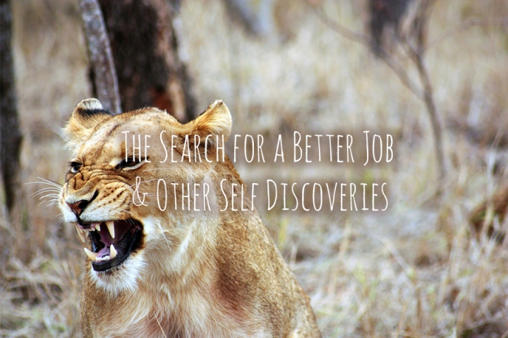 The Search for a Better Job & Other Self Discoveries