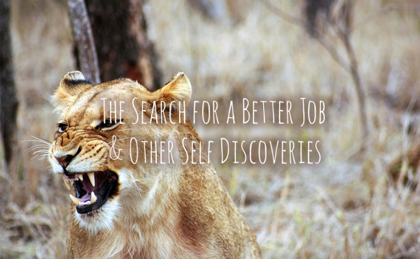 The Search for a Better Job & Other SelfDiscoveries